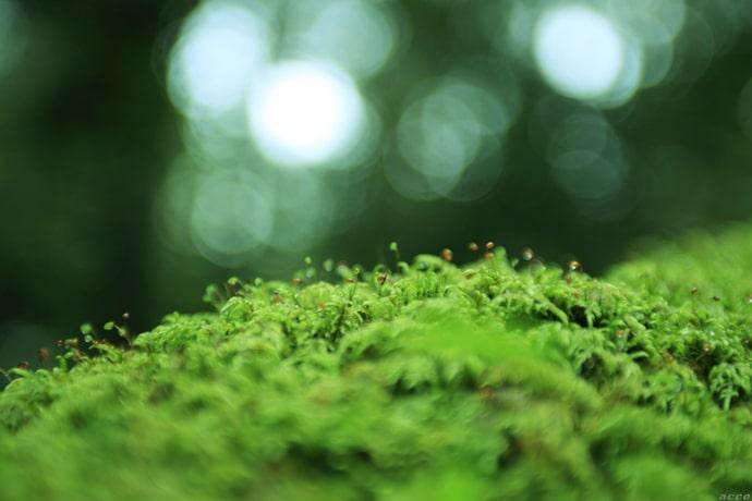 写真コラム『雨、光、音』