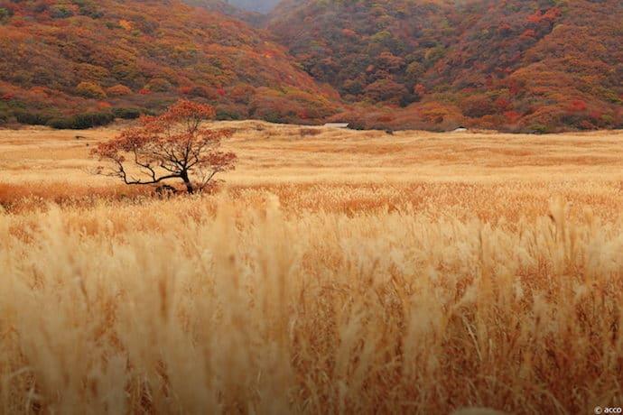 遅い秋の香り