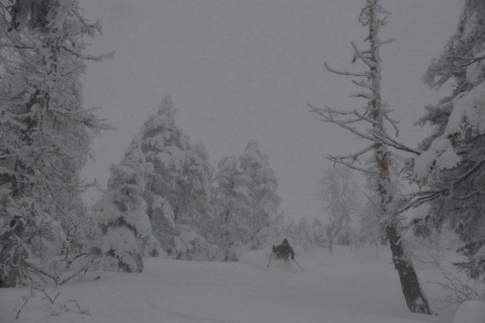 かぐらバックカントリーツアー『森を滑る一日』