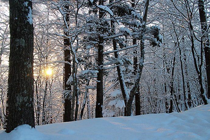 奥多摩小屋からの雪景色