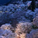 吉野山の桜「下千本夜桜」