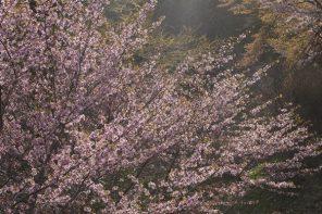 「光の色・風の色2」 (ひかりのいろ・かぜのいろ2)小林義明
