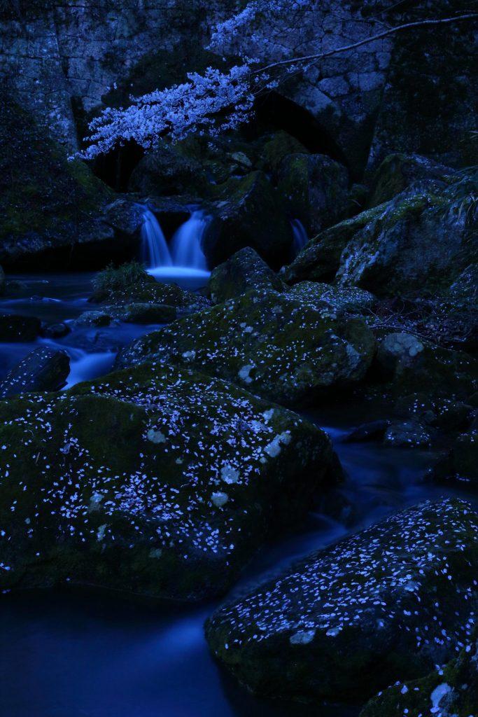 米美知子写真展『桜もよう』