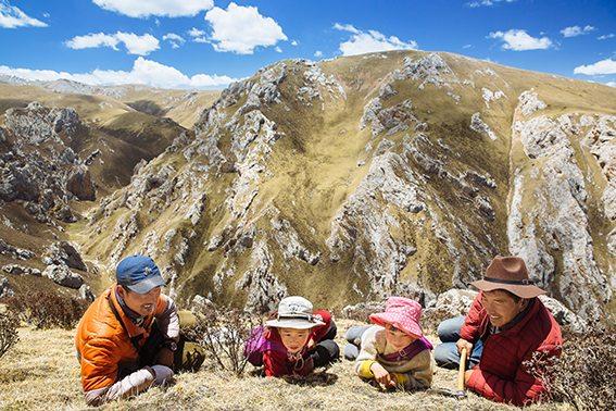 栗田 哲男 写真展:虫草・チベット・極限の標高5,000m地帯で冬虫夏草を採る人々