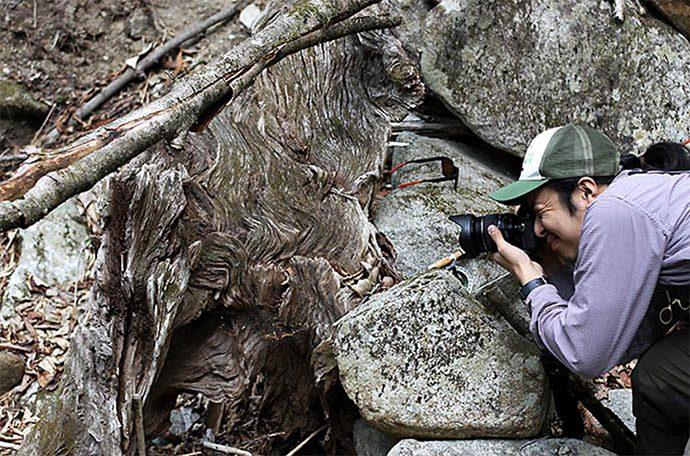 流木を撮影