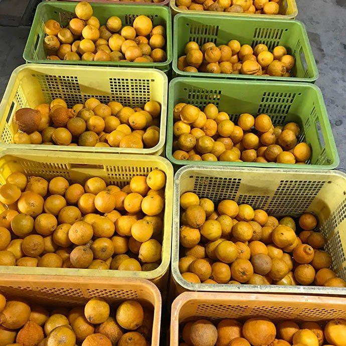 FROM FARM 和歌山の果物