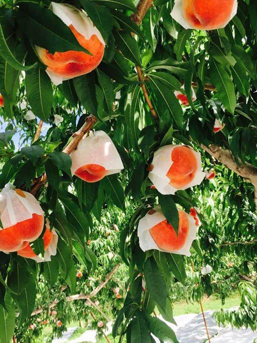 甲府の果物