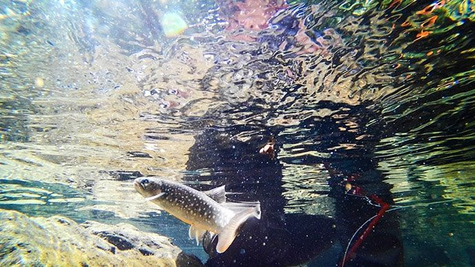 TORQUEG03で撮影する水中写真