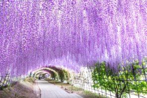 福岡県 河内藤園