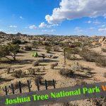 『ジョシュア・ツリー国立公園』キャンプの楽しみ方と上手な選び方