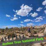 『ジョシュア・ツリー国立公園』入場方法とトレイルの楽しみ方