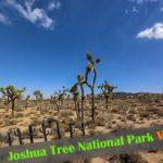 『ジョシュア・ツリー国立公園』見ておきたい絶景ポイント