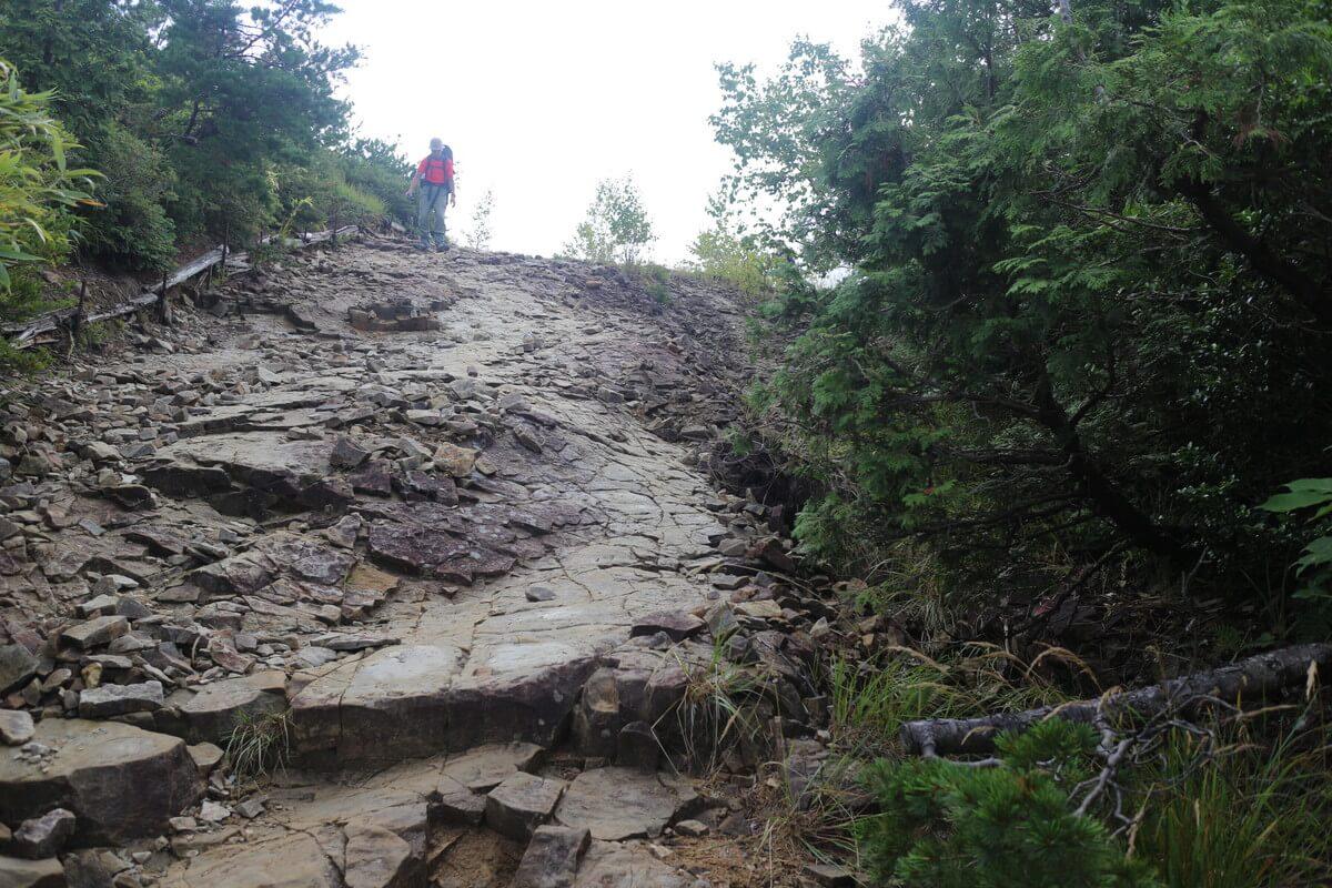 折立の登山口は最初樹林帯