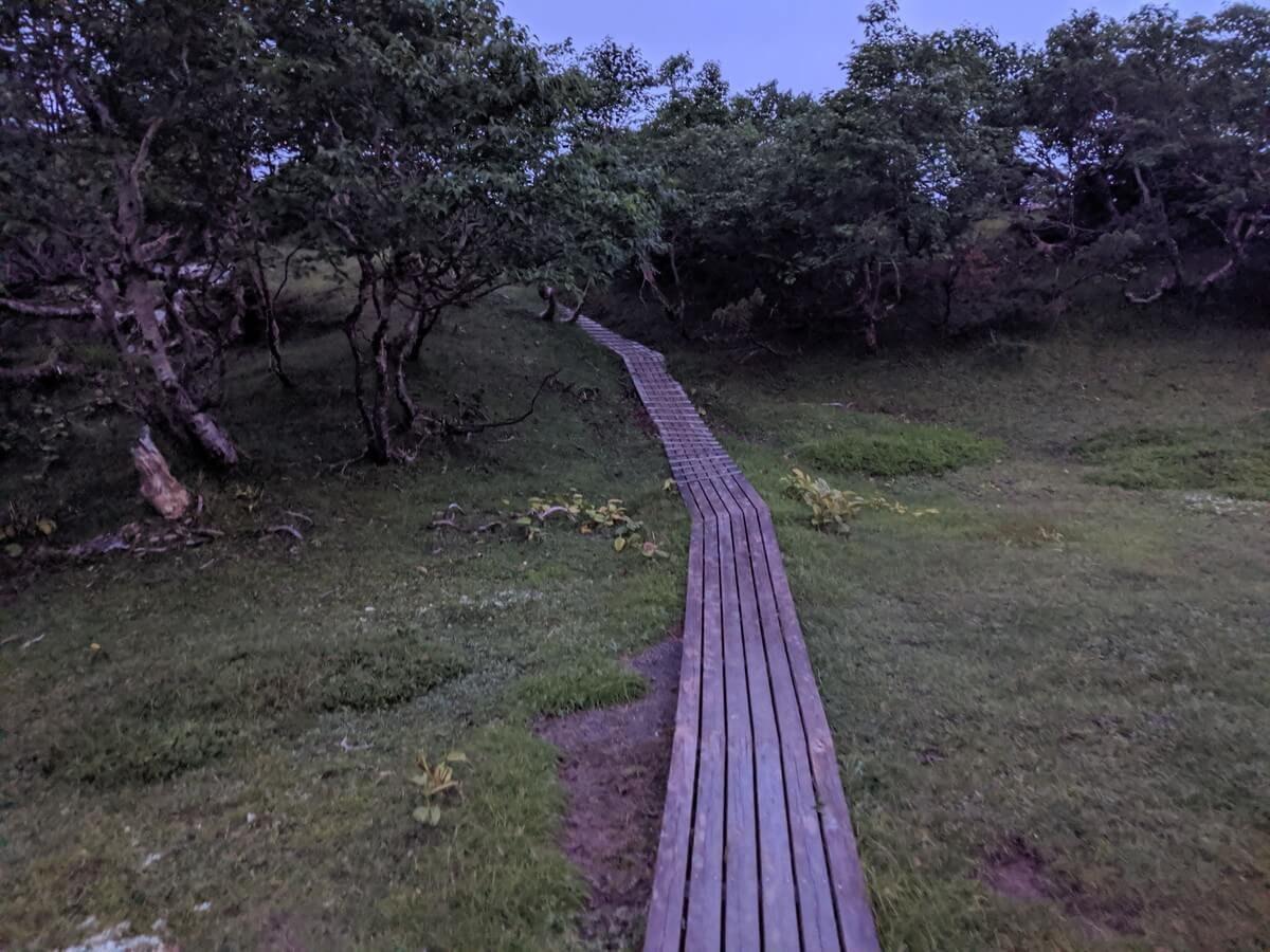 ダケカンバの森の中を突き抜ける木道