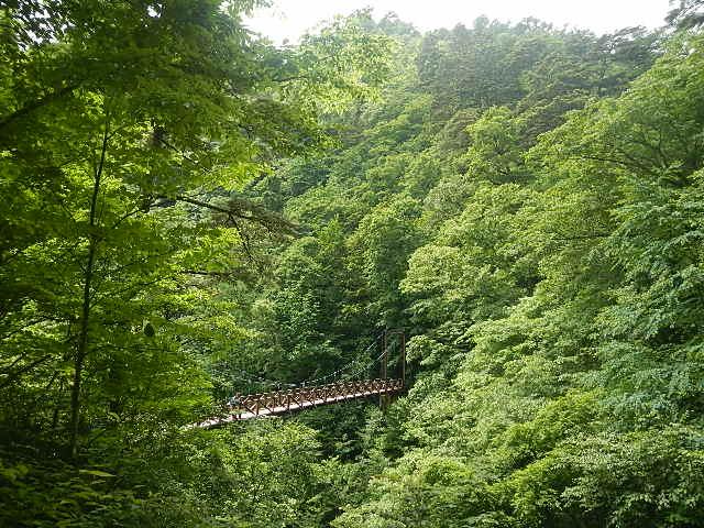 都民の森と体験の森