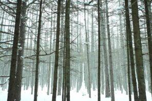 雪山の景色を楽しむカメラ登山−湯ノ丸山編