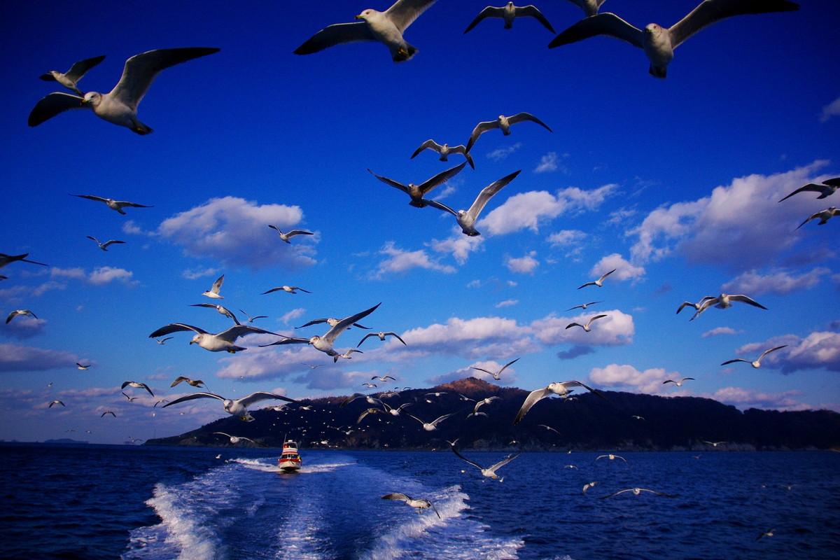 海の只中の名低山、金華山