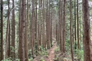 関東近郊おすすめトレイルランニングコース-御岳山〜金毘羅尾根〜武蔵五日市の約20キロ