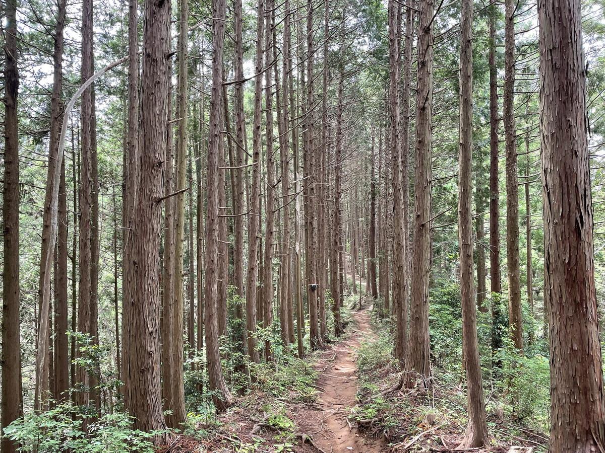 金毘羅尾根のトレイル 関東近郊おすすめトレイルランニングコース