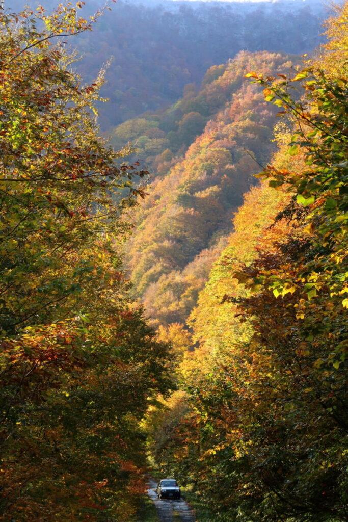 大源太山登山口駐車場に向かう林道