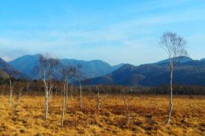 戦場ヶ原自然研究路のハイキング-初心者から子供まで楽しめる
