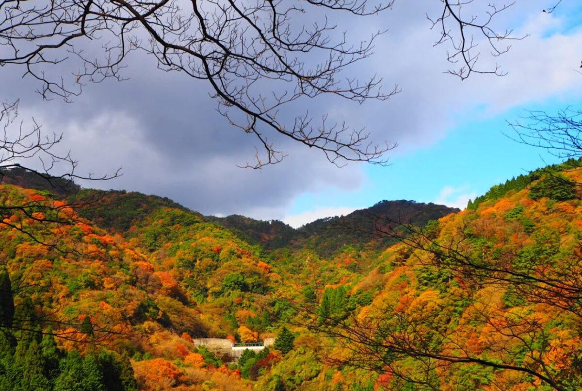 紅葉登山 六甲山