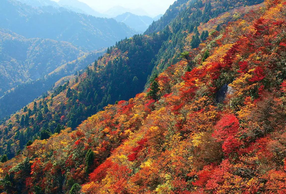 紅葉登山 御在所岳