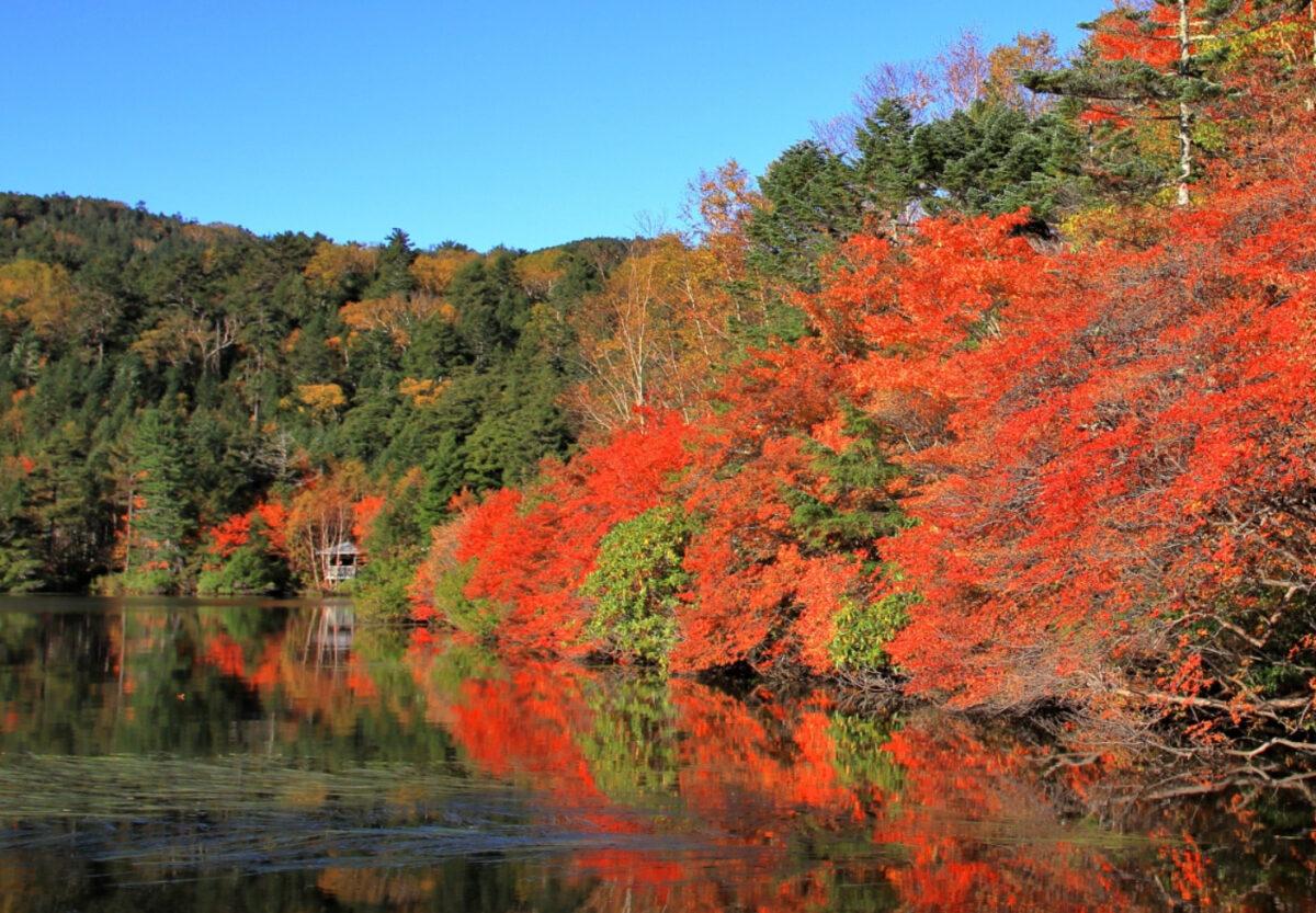 池の周辺で楽しむ紅葉登山 北八ヶ岳