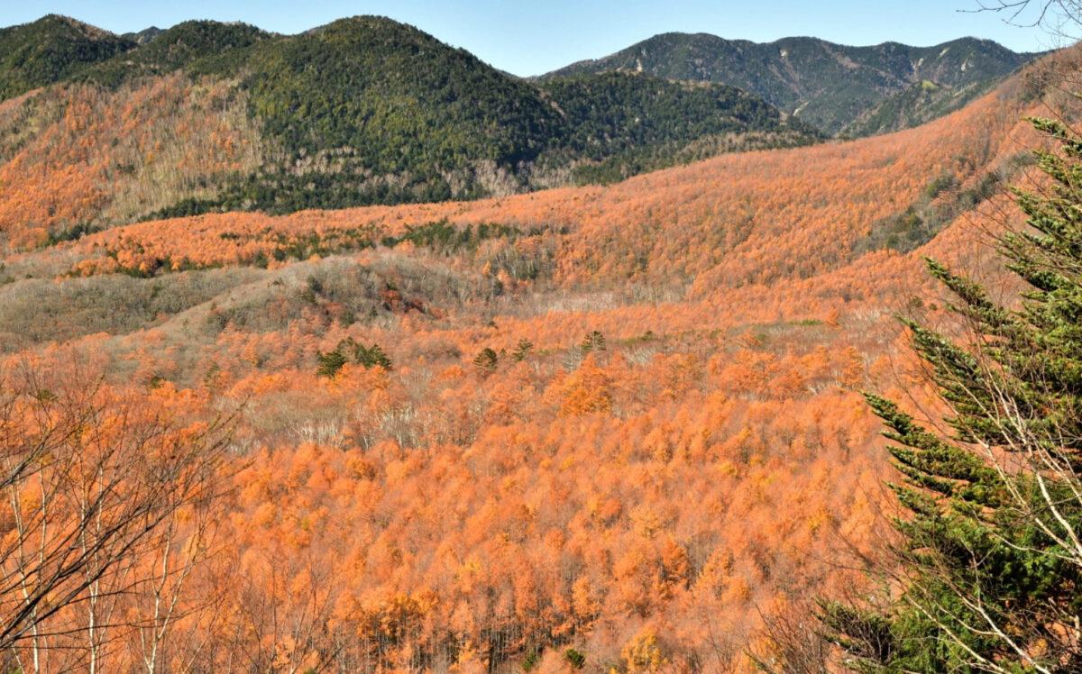 紅葉 季節の影響